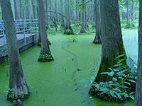 Merveilleux The Creek Heron Pond Shawnee National Forest Cave